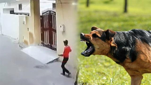 Köpeklerden kaçarken kalp krizi geçirdi