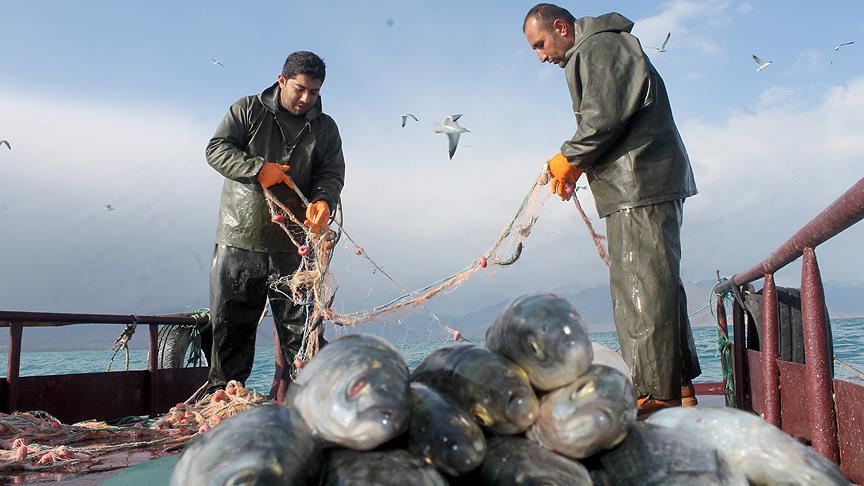 Balıkçıların inci kefali sevinci