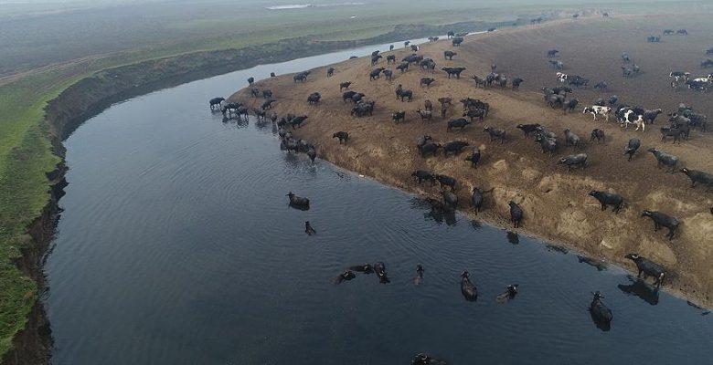 'Afrika savanası' değil Balıkesir