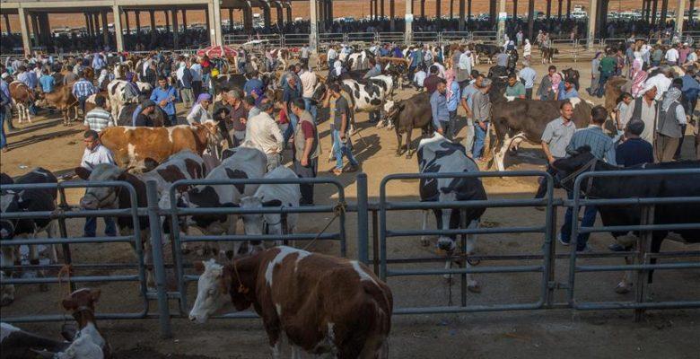 Hayvan pazarında 'kurban' hareketliliği başladı