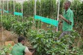 Türk şirketlere Sudan'daki tarım arazisinde yatırım daveti