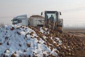 Pancardan şeker üretiminin oranı artırıldı.