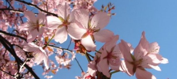 21 Mart ilkbahar ekinoksu gündönümü doğa olayları neler olur.