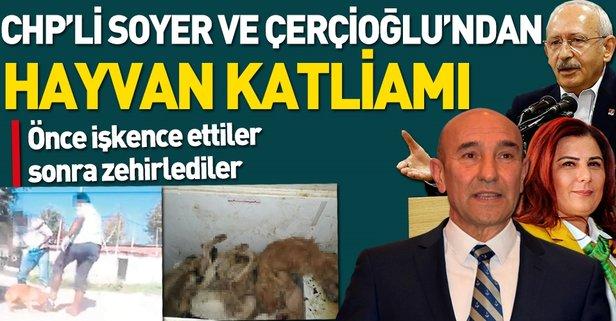 CHP'li Tunç Soyer ve Özlem Çercioğlu'ndan hayvan katliamı.
