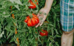 Mevsiminde tüketilen besinler hastalıktan koruyor!