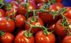 Aşk domatesi.